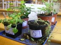 accueil-plante