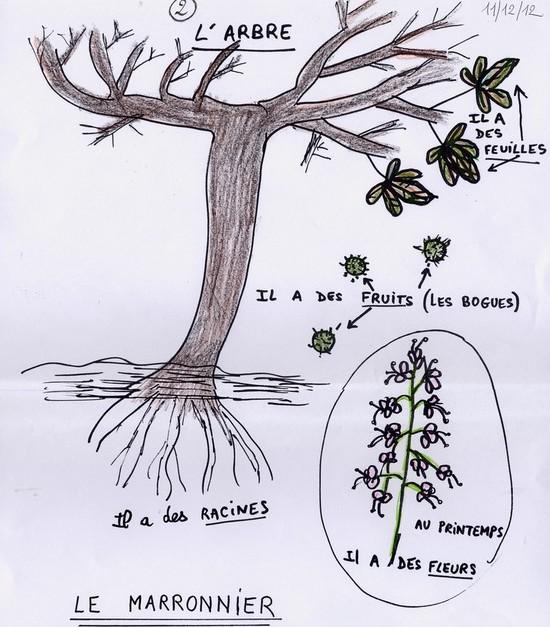2. un arbre est-il une plante ? — sciences en côte d'or