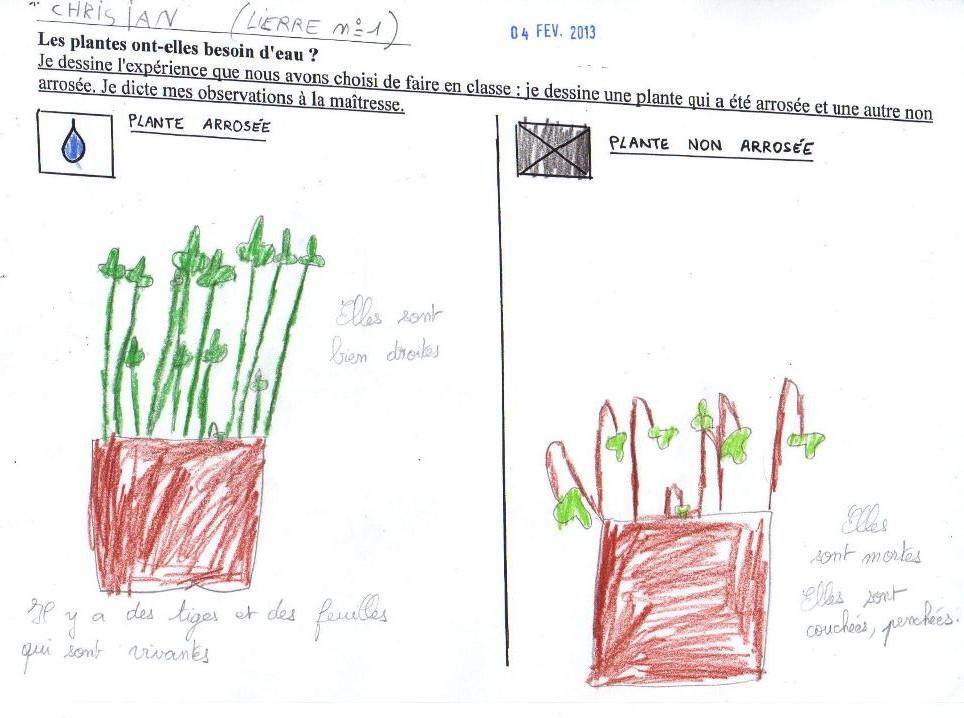 3 Les Plantes Ont Elles Besoin D Eau Sciences En Côte D Or